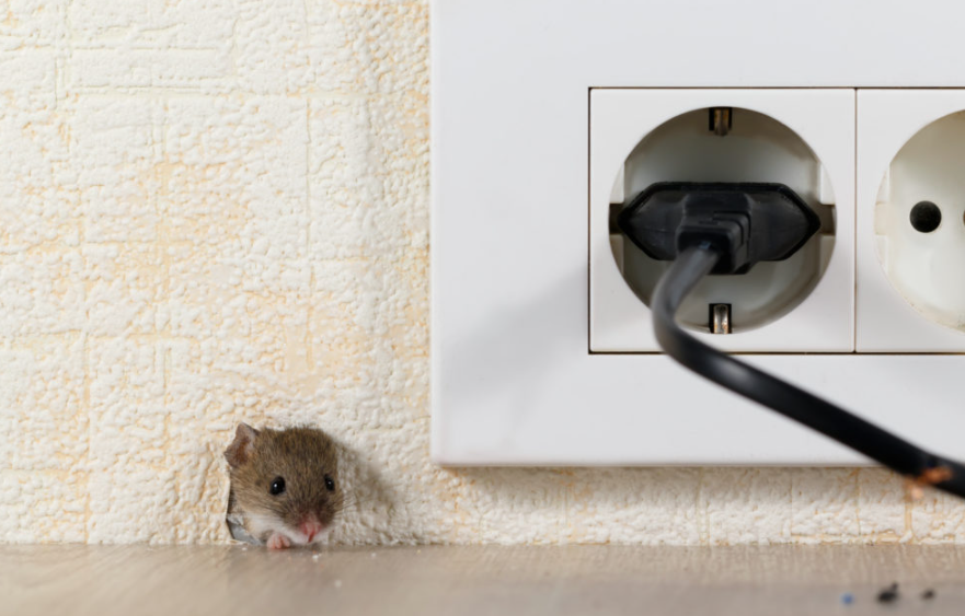 pest control for mice